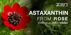 สารสกัดแอสตาแซนทินจากดอกอโดนิส (Adonis Aestivalis)
