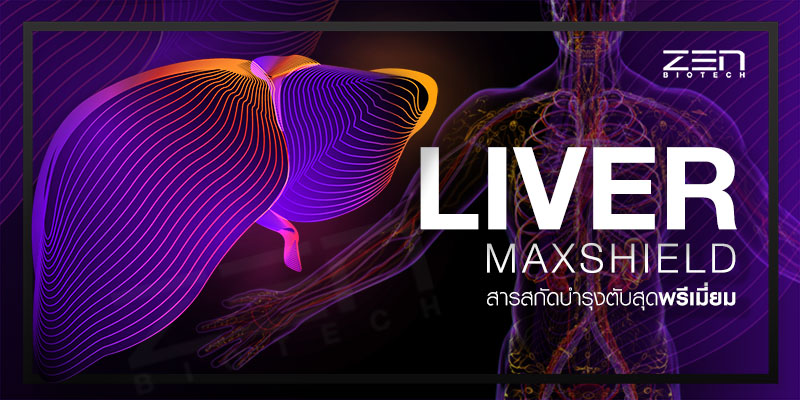 สารสกัดบำรุงตับ Liver Maxshield