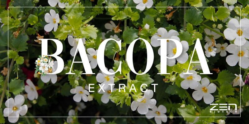 สารสกัดบาโคพา Bacopa