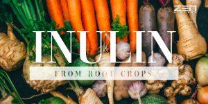 สารสกัดอินนูลิน Inulin