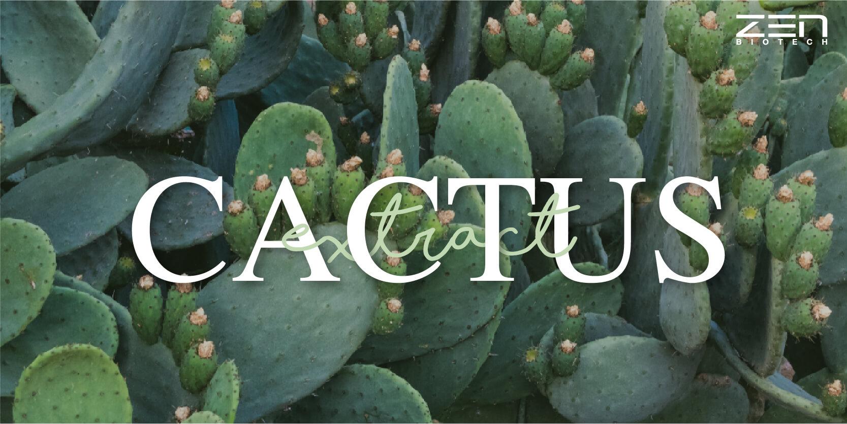 สารสกัดจากกระบองเพชร Cactus Extract