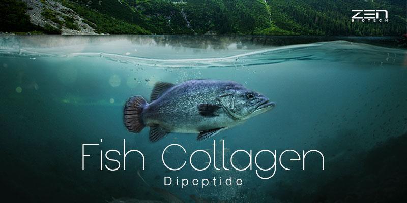 สารสกัดจากคอลลาเจนจากปลาน้ำจืด Fish Collagen Dipeptide