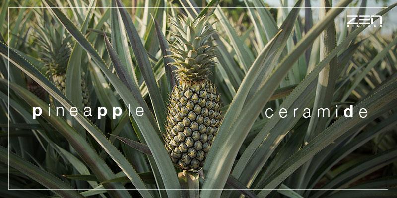 สารสกัดจากเซราไมด์ในสัปปะรด Pineapple Ceramide