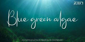 สาหร่ายสีเขียวแกมน้ำเงิน Blue green algae
