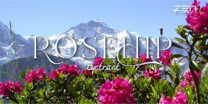สารสกัดจากสเต็มเซลล์กุหลาบบนเทือกเขาแอลป์ Rosehip Extract