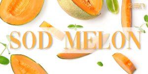 สารสกัดจากเมล่อน SOD เข้มข้น SOD Melon Powder