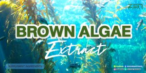 สารสกัดจากสาหร่ายสีน้ำตาล Brown algae extract